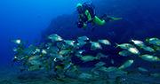 Notre article sur les fonds marins à Madère