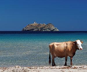 île de Giraglia