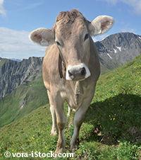 Vacances en Autriche - Tyrol