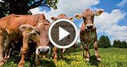 Vidéo touristique de l'Autriche