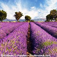 Guide touristique France - Provence