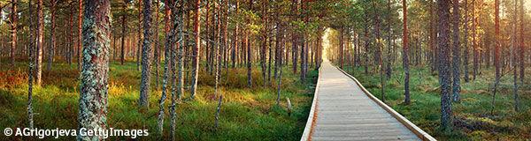 Parc national Lahemaa (Estonie)