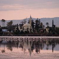 guide-destination-chypre-mosquee-hala-Sultan