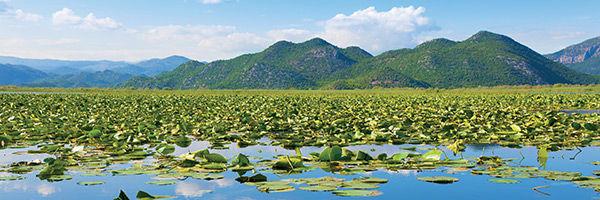 Le lac de Skadar, au Monténégro